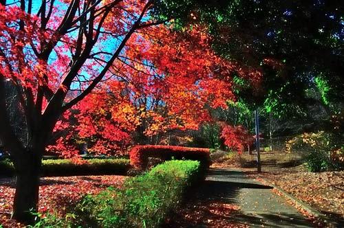 紅葉の上柚木公園